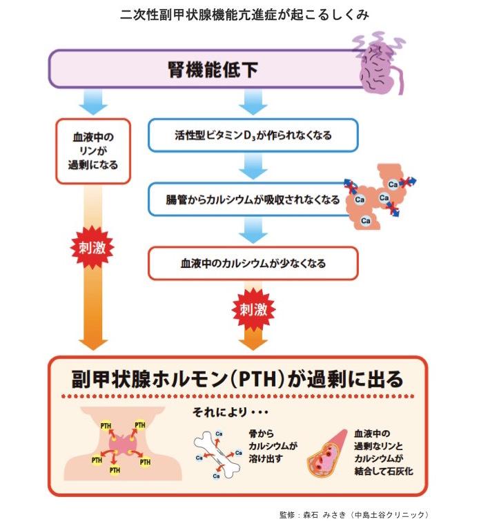 低下 甲状腺 ホルモン