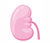 クレアチニン(CRE):腎移植後の管理で重要な検査値解説【1】